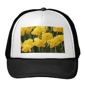 Flores amarillas del narciso en la floración gorras