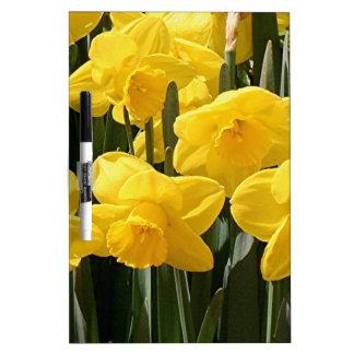 Flores amarillas del narciso en la floración pizarras blancas