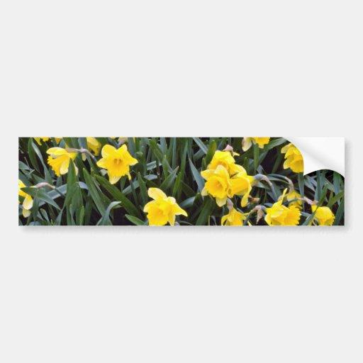 Flores amarillas del narciso pegatina para auto