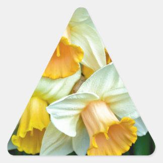 Flores amarillas del narciso pegatina triangular