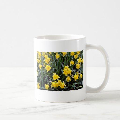 Flores amarillas del narciso tazas de café