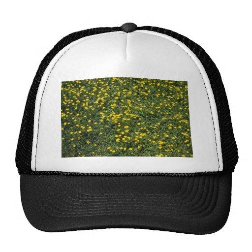 flores amarillas del ranúnculo común (ranúnculo) gorro de camionero
