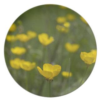 Flores amarillas del ranúnculo platos para fiestas