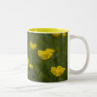 Flores amarillas del ranúnculo taza