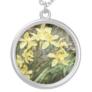 flores amarillas del reno (Cymbidium) Grimpola