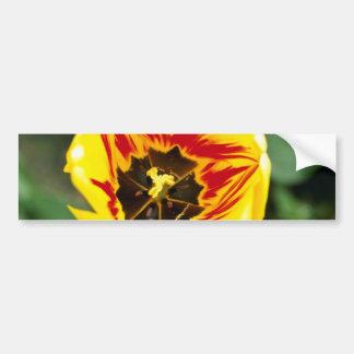 flores amarillas del tulipán pegatina de parachoque