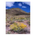 Flores amarillas en Death Valley Tarjetas Postales