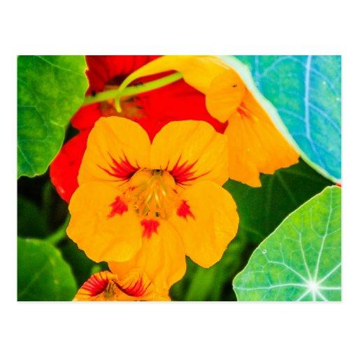 Flores amarillas en una fila postales