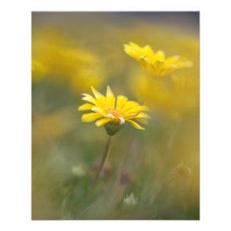Flores amarillas tarjetas informativas