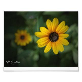 ¡Flores amarillas hermosas! Impresion Fotografica