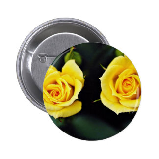 "Flores amarillas híbridas de ""Oregold"" del rosa de Pin"