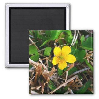 Flores amarillas imán cuadrado