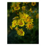 Flores amarillas impresiones