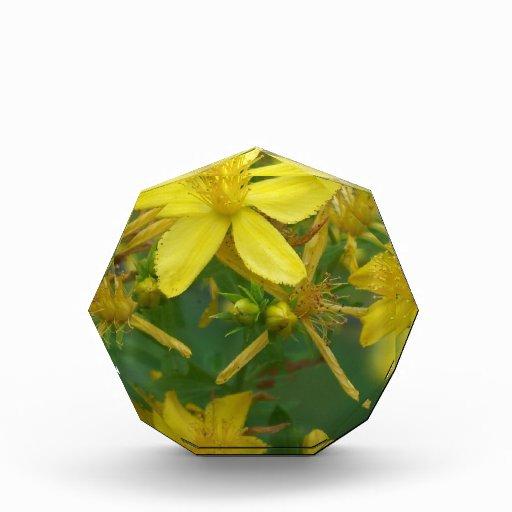 Flores amarillas minúsculas