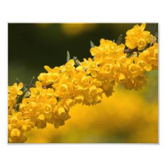 Flores amarillas minúsculas impresiones fotograficas