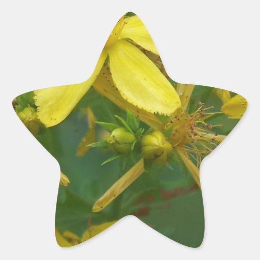 Flores amarillas minúsculas calcomanías forma de estrellaes