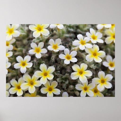 Flores amarillas minúsculas póster