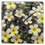 Flores amarillas minúsculas relojes
