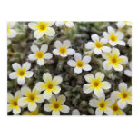 Flores amarillas minúsculas tarjeta postal