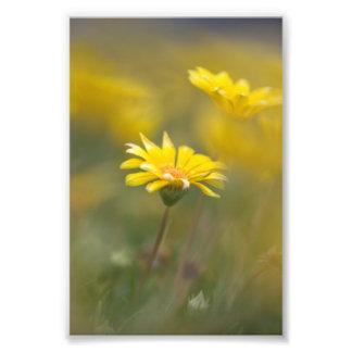 Flores amarillas impresión fotográfica