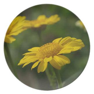 Flores amarillas platos