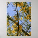 flores amarillas posters