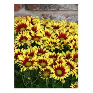 Flores amarillas rojas contra la pared de ladrillo tarjetas postales