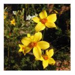 Flores amarillas soleadas. Bidens. Escultura Fotográfica