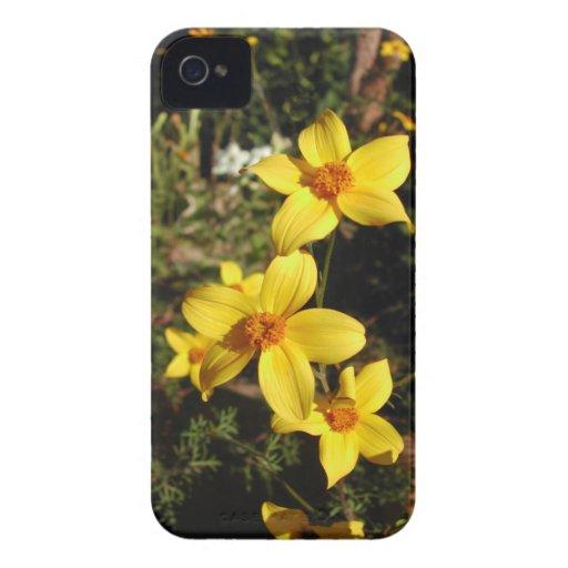 Flores amarillas soleadas. Bidens. iPhone 4 Cárcasa