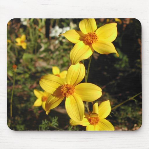 Flores amarillas soleadas. Bidens. Tapete De Raton