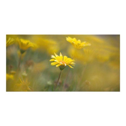 Flores amarillas tarjeta fotografica personalizada
