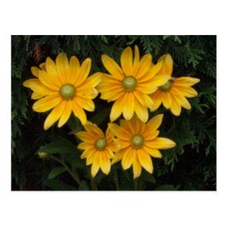 Flores amarillas tarjeta postal