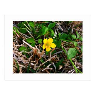 Flores amarillas tarjetas postales