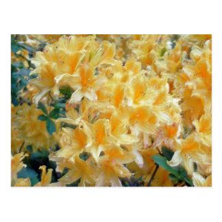 Flores amarillas Throated de oro de las azaleas Tarjeta Postal