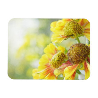 Flores amarillas y anaranjadas bonitas del Heleniu Iman