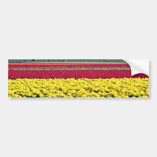 Flores amarillas y rojas de la granja del tulipán etiqueta de parachoque