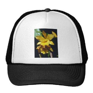 flores amarillo-naranja de la pepita Brassocattle Gorro