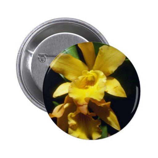 flores amarillo-naranja de la pepita (Brassocattle Pin