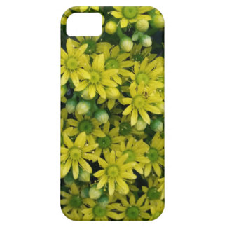 Flores amarillos de la flor del aeonium en la caja funda para iPhone SE/5/5s