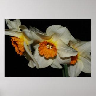 Flores anaranjadas blancas poster