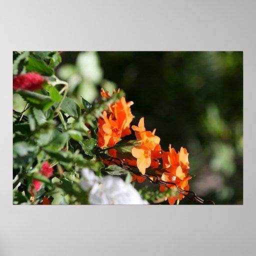 flores anaranjadas contra la parte posterior del v póster