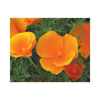 Flores anaranjadas de California Lona Estirada Galerias