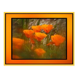 Flores anaranjadas de la amapola de California Tarjetas Postales