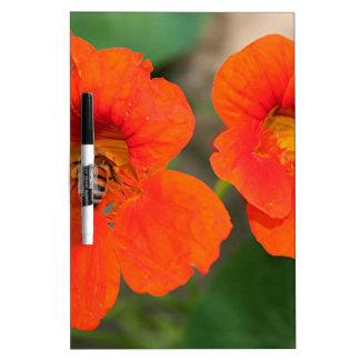 Flores anaranjadas de la capuchina en la floración pizarras