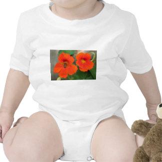 Flores anaranjadas de la capuchina en la floración trajes de bebé