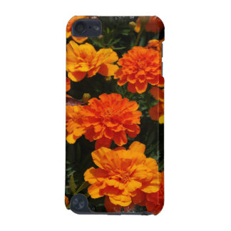Flores anaranjadas de la maravilla
