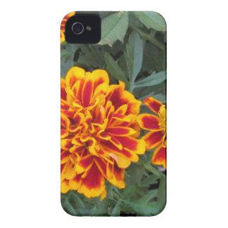 Flores anaranjadas de la maravilla iPhone 4 cárcasa