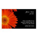 flores anaranjadas de la margarita del gerbera tarjetas de visita