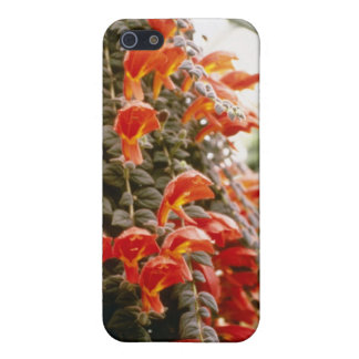 Flores anaranjadas de la planta del Goldfish de Co iPhone 5 Funda