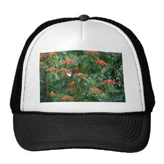 Flores anaranjadas de la planta del poinsettia del gorro